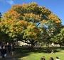Georgetown University campus (Photo: Courtesy of Agnieszka Bieńczyk-Missala and Błażej Moder)